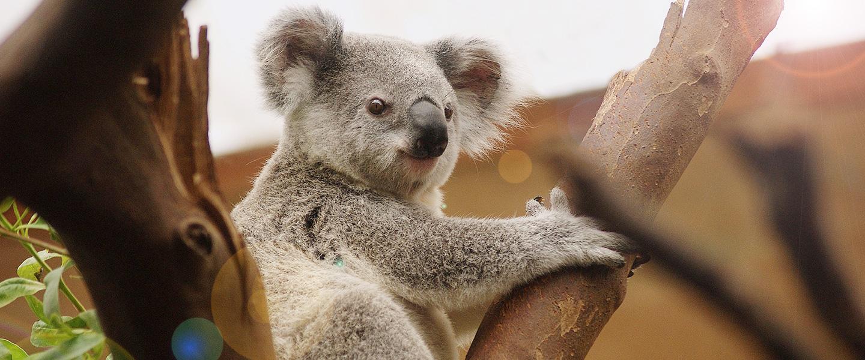 專業包車旅遊帶你澳洲走透透?
