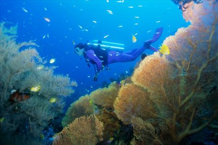 迷戀沙巴海洋風情海島樂 珊瑚灣 九沙灣 班蘭島