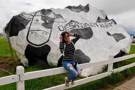 沙巴大自然探索/文化之遊 神山公園+保齡溫泉+乳牛場一日遊